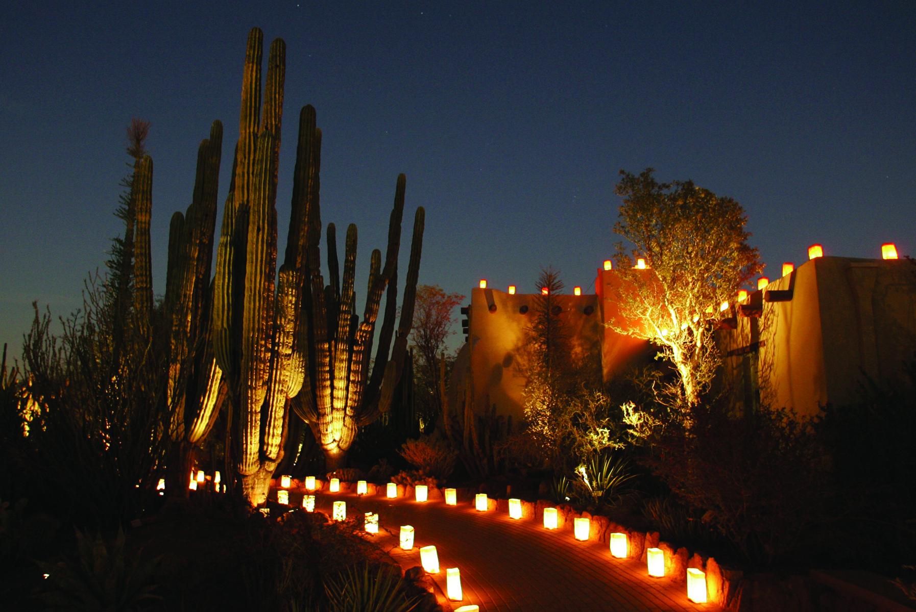 Desert Botanical Garden Luminaries Las Noches De Las Luminarias At Desert Botanical Garden The